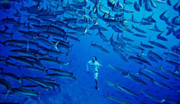 La Isla Malpelo, Colombia, fue declarada por la UNESCO Patrimonio Natural de la Humanidad en julio de 2006.