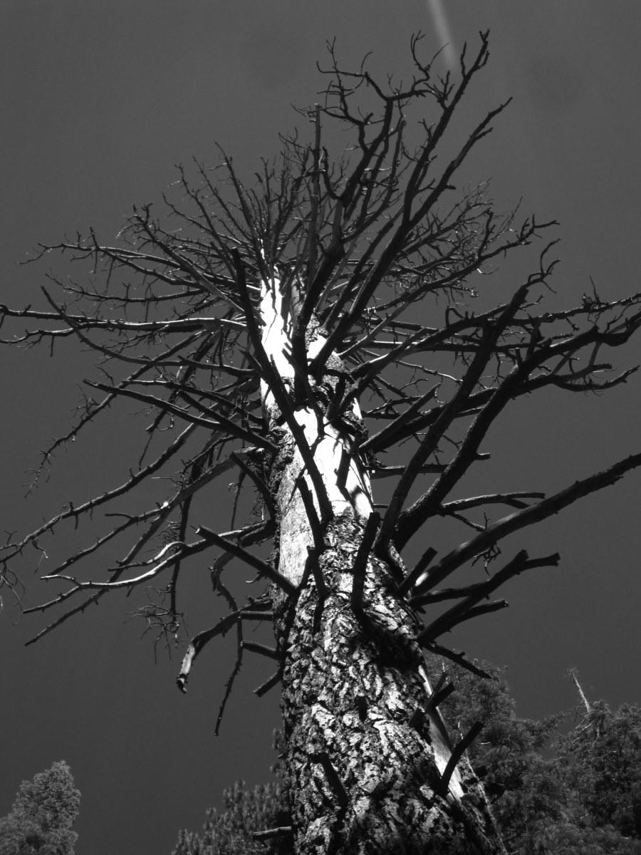 Ansel Adams Wilderness and Devils Postpile