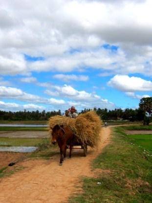 Koh Trong Farming