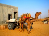 February- Our chariot in the Thar Desert, near Bikaner, India
