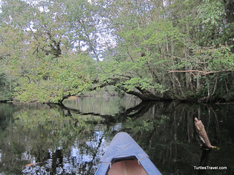 Exploring the Hillsborough River by Canoe