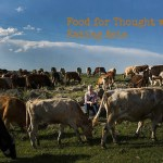 david-hagerman-robyn-eckhardt-and-cows-van-turkey-june-2014Page