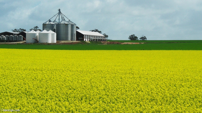 Summer to me means that the landscape is turning green with many colourful dots here and there. Like when you're driving along a country road and the hills are dotted with bright yellow fields of canola plants.