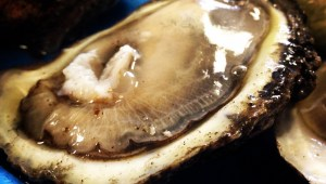 October: Raw Oyster
