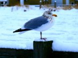 Gull chilling out
