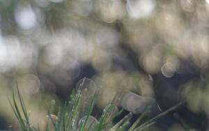"Rendu typique du bokeh du trioplan : l'effet ""bulles de savon"". Photo : Thomas Summer"