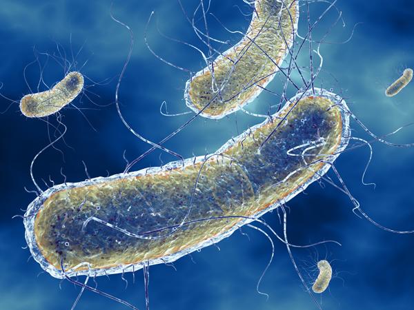Пиелонефрит: что это, чем опасен, причины, симптомы и лечение пиелонефрита