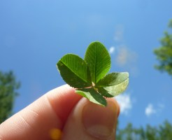 four-leaf-clover-19776_1920