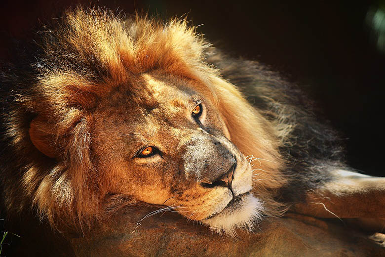 3d Tunnel Wallpaper 25 Magnificent Pictures Of Lions 171 Twistedsifter