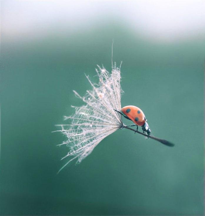 ladybug dandelion perfect timing