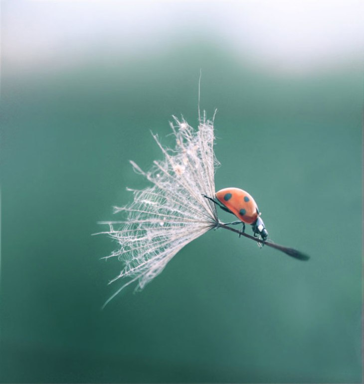 ladybug dandelion perfect timing