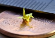 Picture of the Day: A Miniature World Inside aBottle