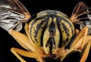 15 Stunning Photos of the GlasswingedButterfly