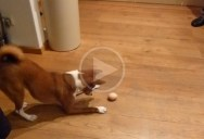 This is How Dogs React to Humans Barking
