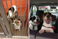 12 Heartwarming Before and After Photos of AdoptedDogs