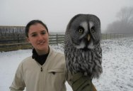 10 Awesome Facts About Owls [15 pics]