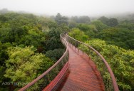 The Longest Tree Top Walk in the World