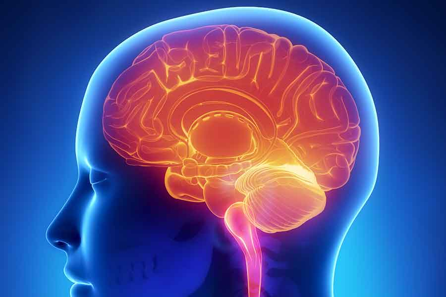 Which Parts of the Brain are Impaired By Alcohol? Luxury Drug and