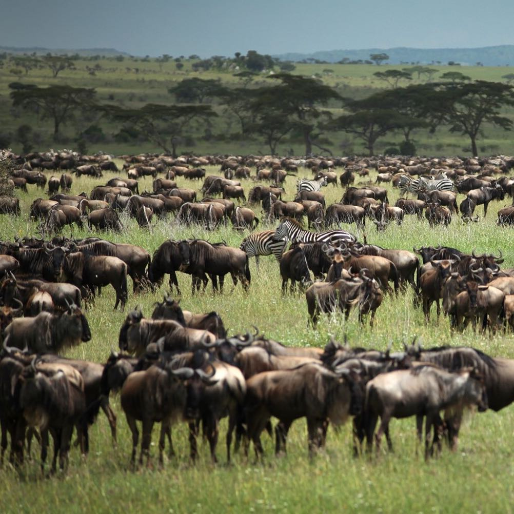 Welcome to the Great Migration! Imagine our excitement when wehellip