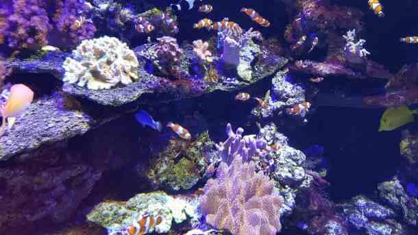 Family Fun Under The Sea At The Sea Life Aquarium In