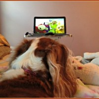 Television Watching Secrets Revealed #MyPetLovesLG4KTV