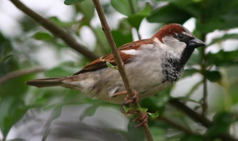 bsparrow4-1-1024×640