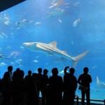 サンシャイン水族館が入場料金が割引になるチケットの入手方法とは?