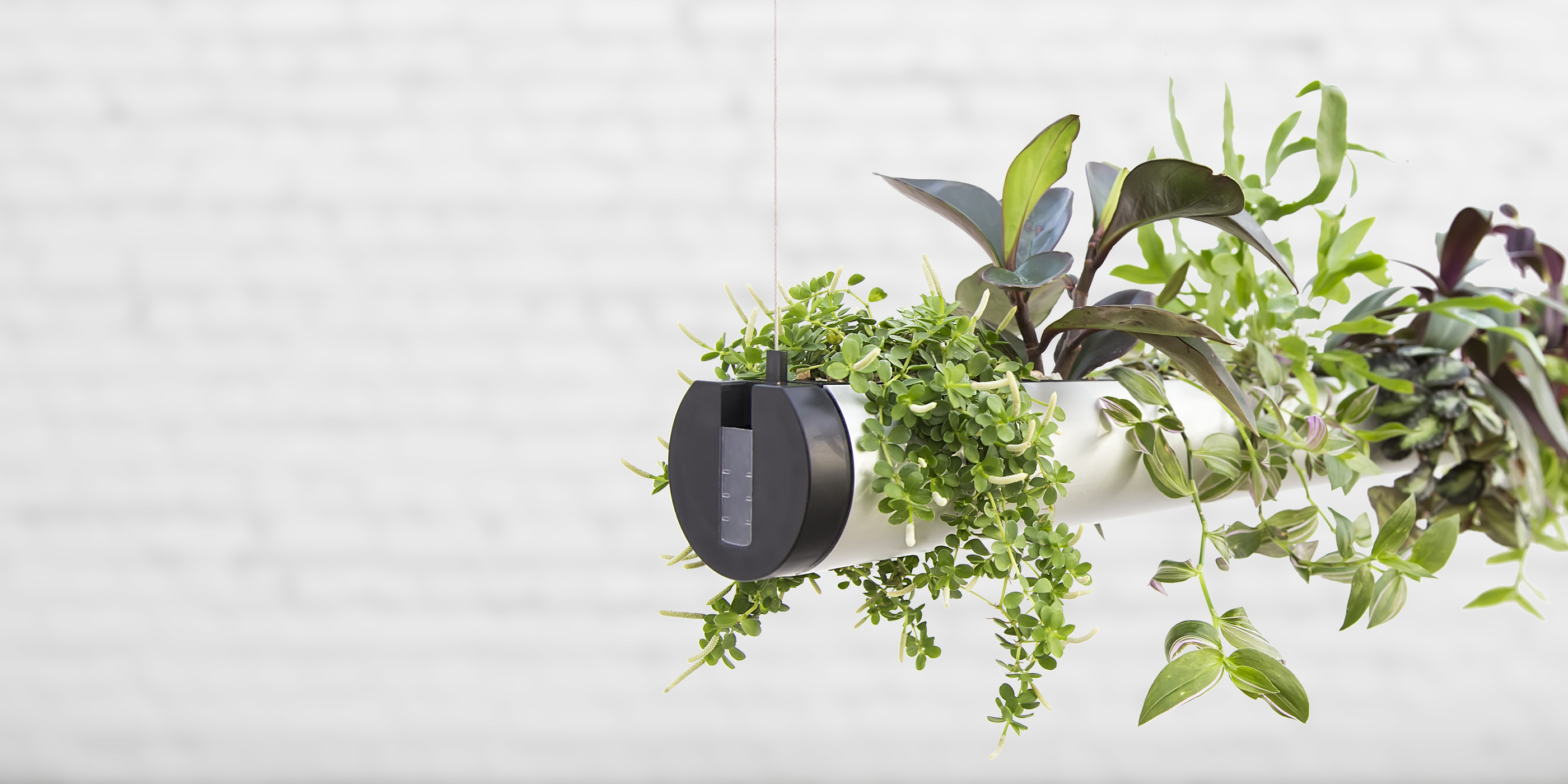 Indoor Pflanzen Indoor Floating Garden Pendularis