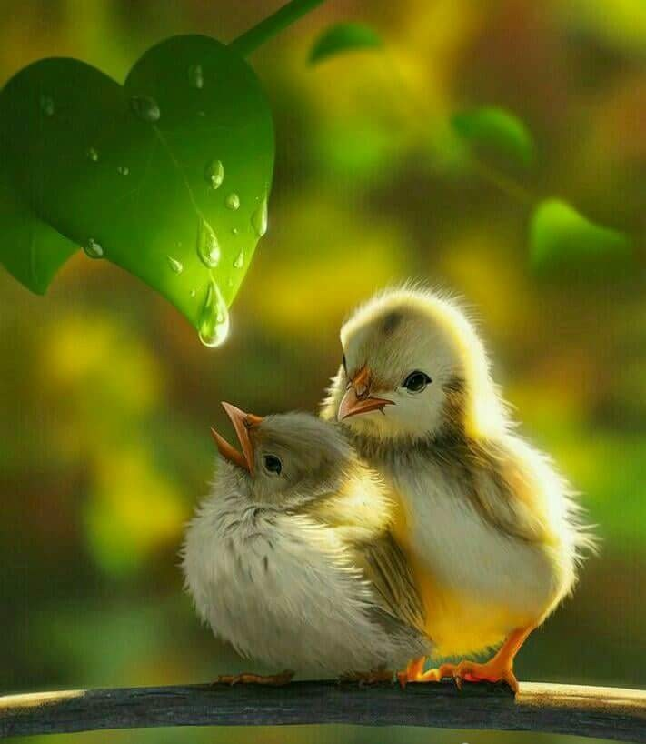 Beautiful Wallpapers With Quotes Of Life Download Bird Love Beautiful Photography Mi Community Xiaomi