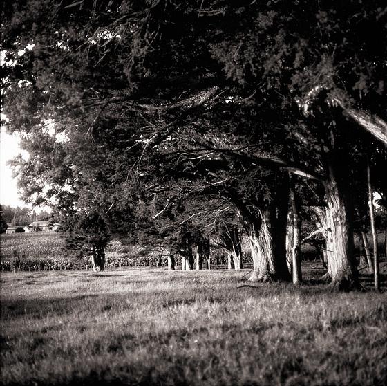 Under The Totara Grove