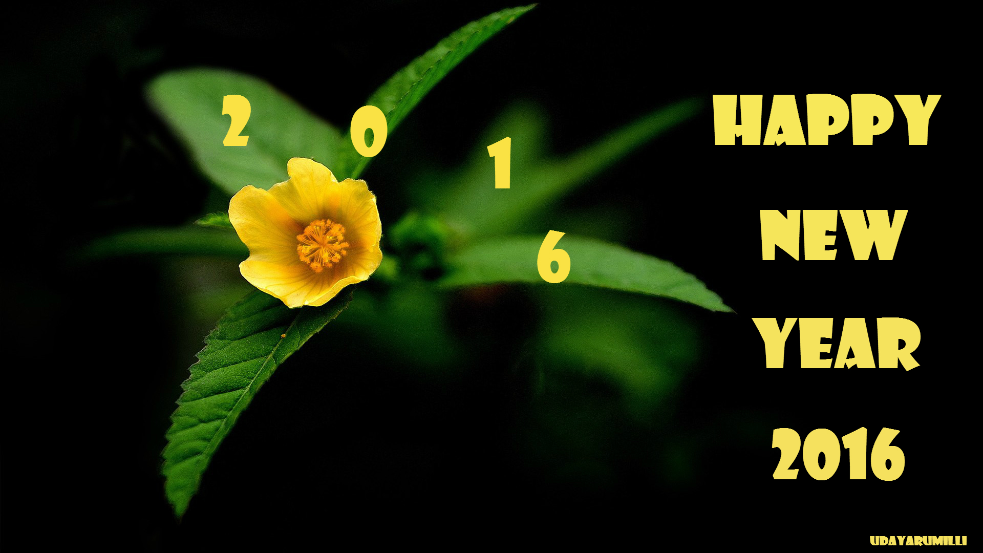 Happy 24 Happy New Year 2016 Wishes And Images
