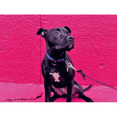 Medium Crop Of Dog Rescue Videos