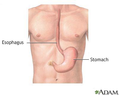 Esophagus and stomach anatomy - UI Health Care - anatomy of stomach