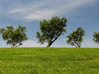 trees_park