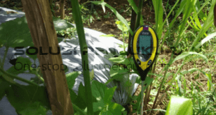 Pentingnya pH Tanah