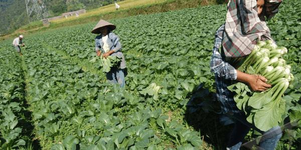 Mengenal Lebih Jauh Teknologi Dalam Pertanian Organik2