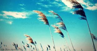 Pengertian Tentang Angin
