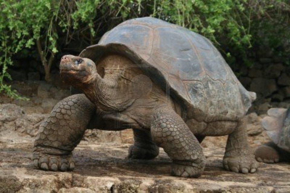 Cute Baby Animals Wallpaper Icon 3147893 Galapagos Giant Tortoise Uldissprogis