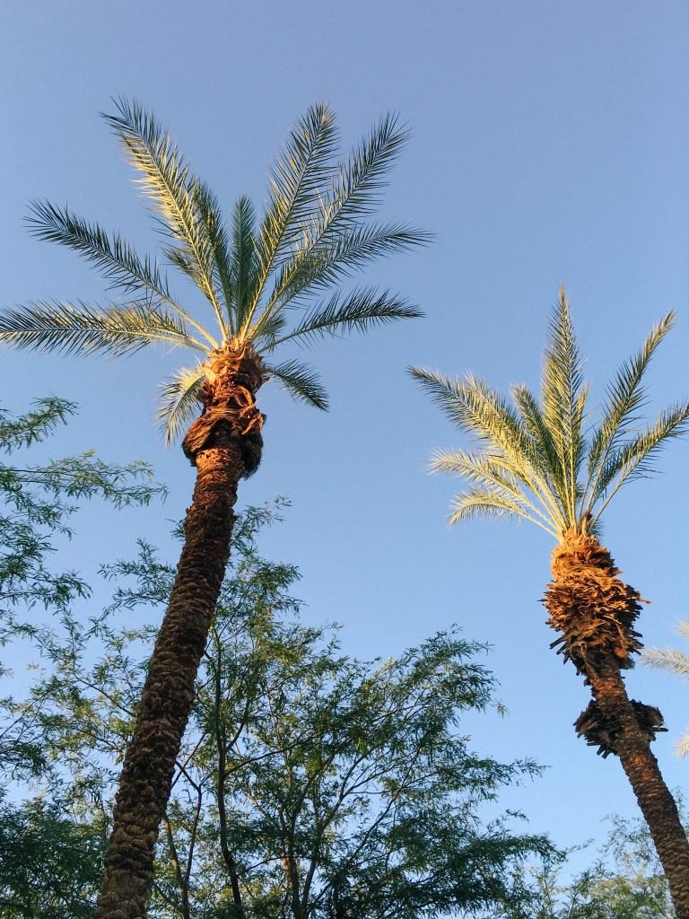 palm-springs-desert-5008