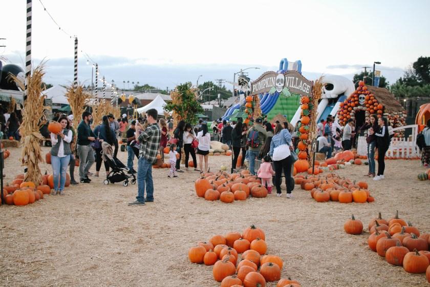 pumpkin-patch-8479