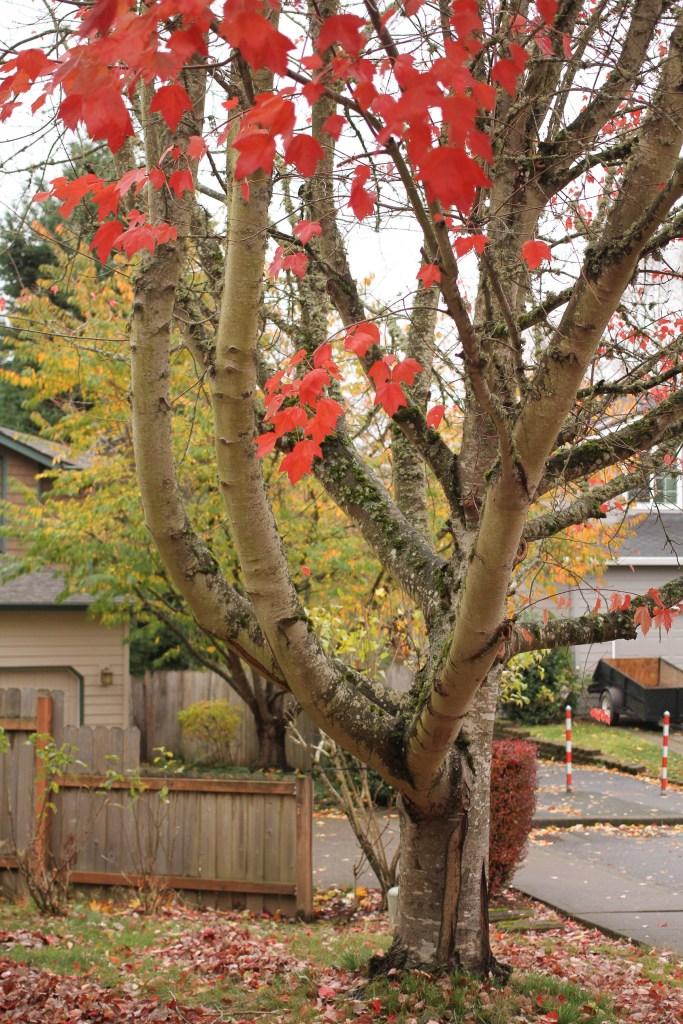 Portland-4589