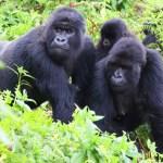 9 Day Rwanda Holiday Safari