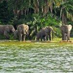 Rubondo Island National Park