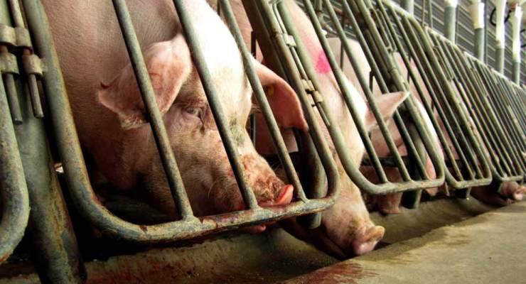 Ultraculture   Factory Farms