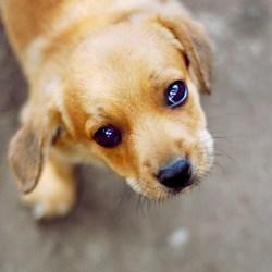 Small Of Sad Puppy Gif