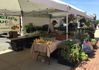 The owner of Valencia's Produce shows off his fresh produce and plants. Jared Beinart/Mitzpeh.