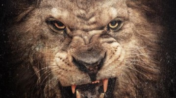 50 Cent - Animal Ambition Album Download