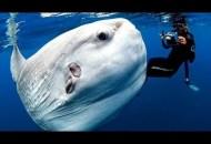1422896701_Samye-Strannye-v-Mire-Zhivotnye-Chudaki-v-Okeane-Dokumental-nyiy-Fil-m-National-Geographic