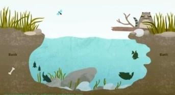 Tips Jitu Cara mengetahui tempat yang banyak ikan