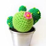 Cactus que no pinchan